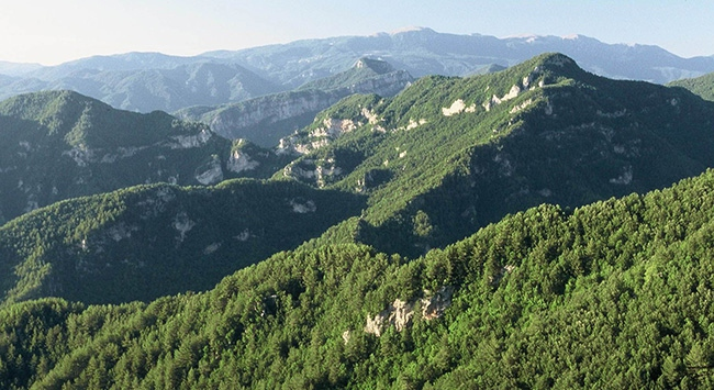 Orman ve Su İşleri Bakanlığından orman köylülerine destek