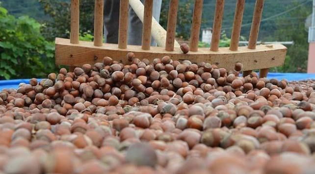 Fındık üreticilerine destek ödemeleri 3 Nisan'da başlayacak